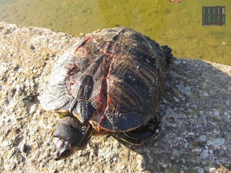Parco 2 giugno c 39 chi lancia sassi contro le tartarughe for Sassi per tartarughe