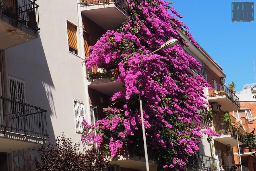 Galleria foto bari quella bouganville viola alta 4 piani for Palazzo a 4 piani