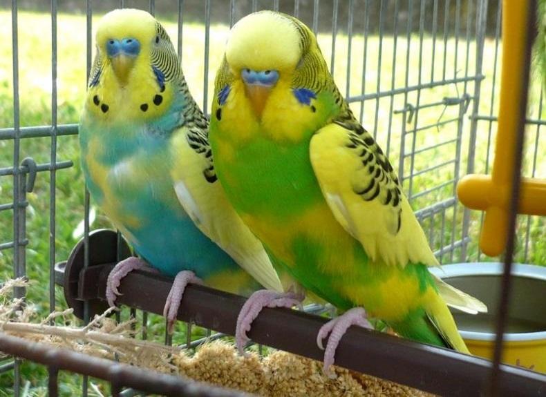 Pappagalli ''in'', criceti ''out'': il mercato dei piccoli animali domestici  Barinedita ...