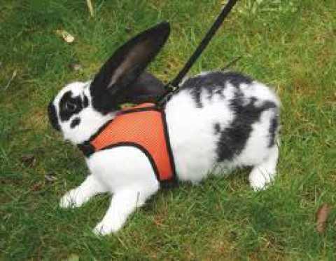 Addio A Cani E Gatti Lanimale Da Compagnia Perfetto è Il Coniglio